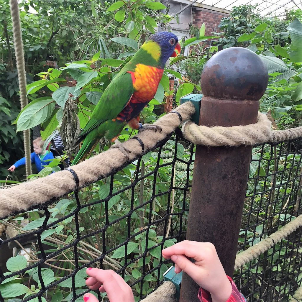 Tropical Butterfly House cheeky parrots