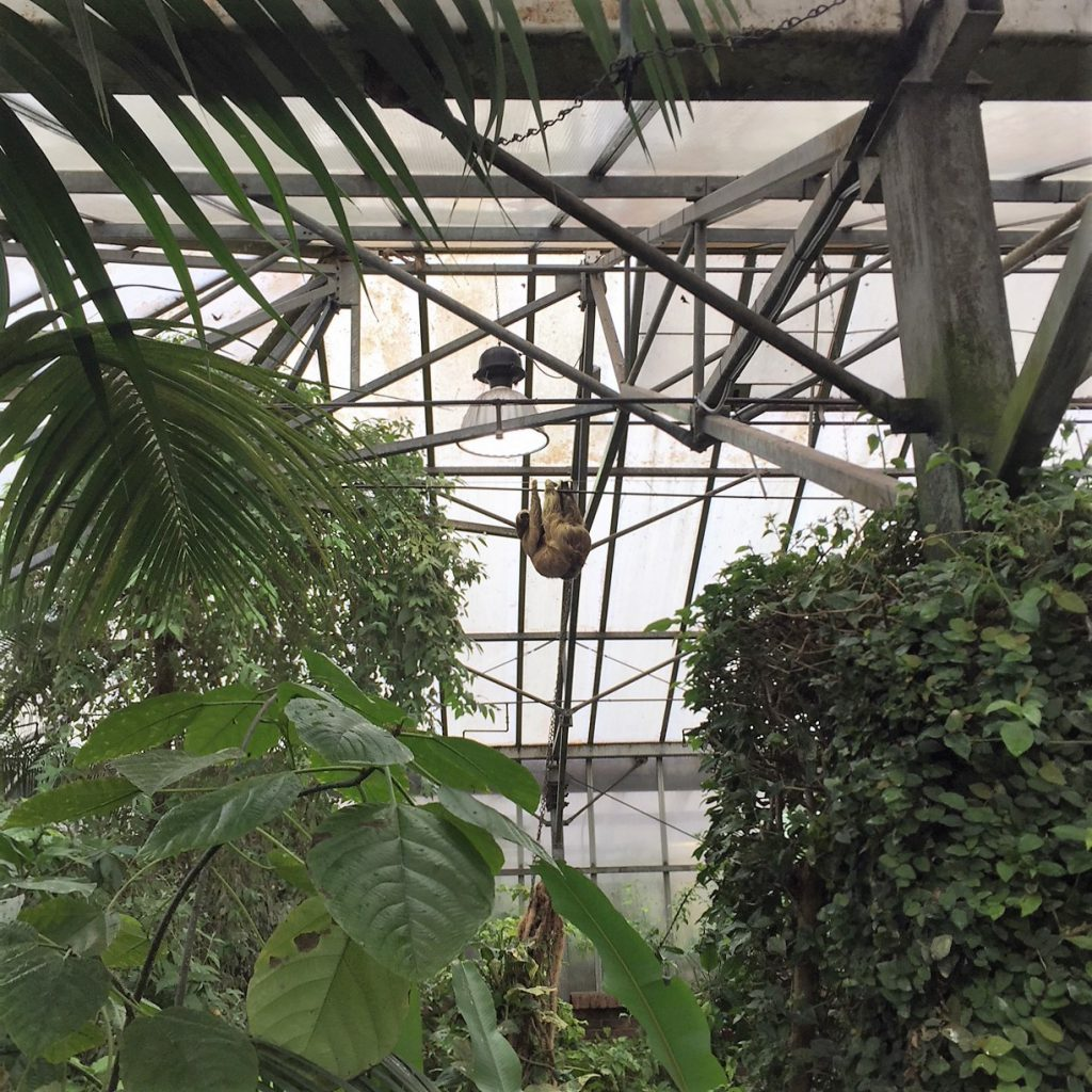 Vincent van Sloth at Tropical Butterfly House