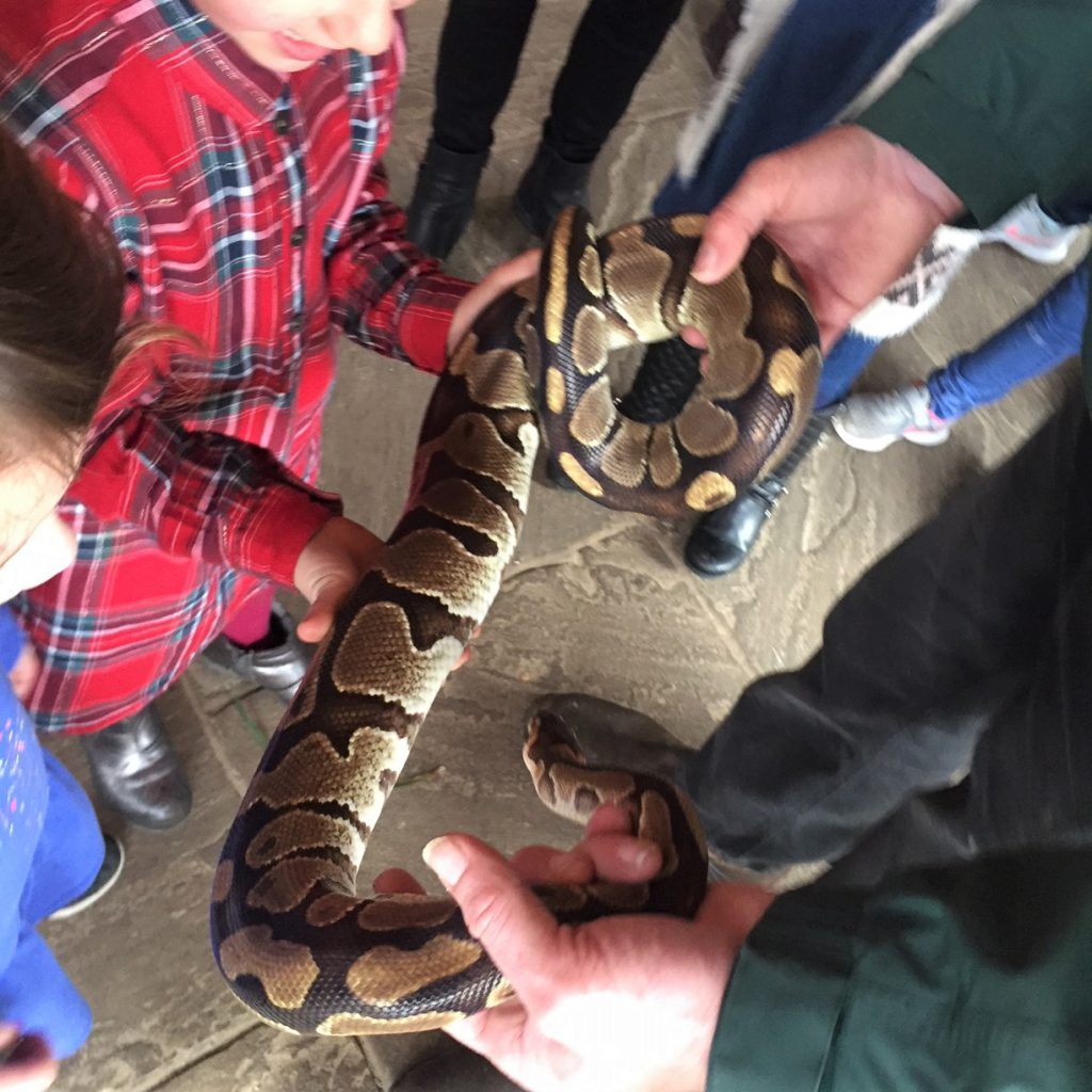 Tropical Butterfly House snake