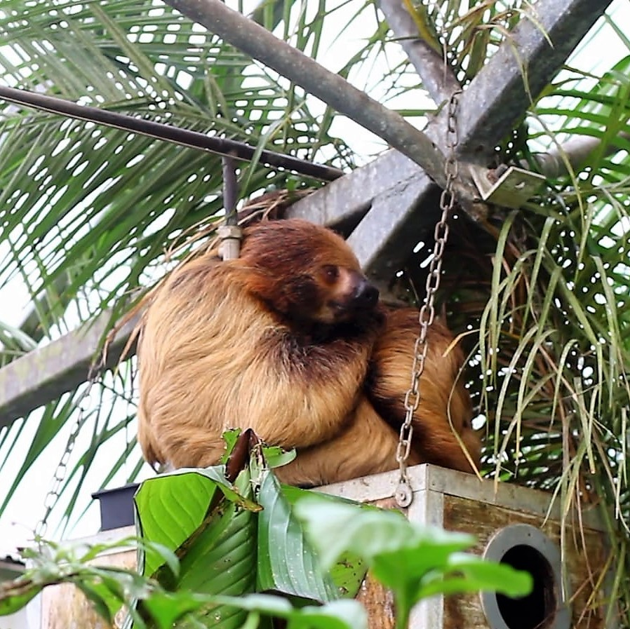 Tropical Butterfly House Sloth