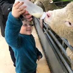 Feeding the lambs at Cotswolds Farm Park